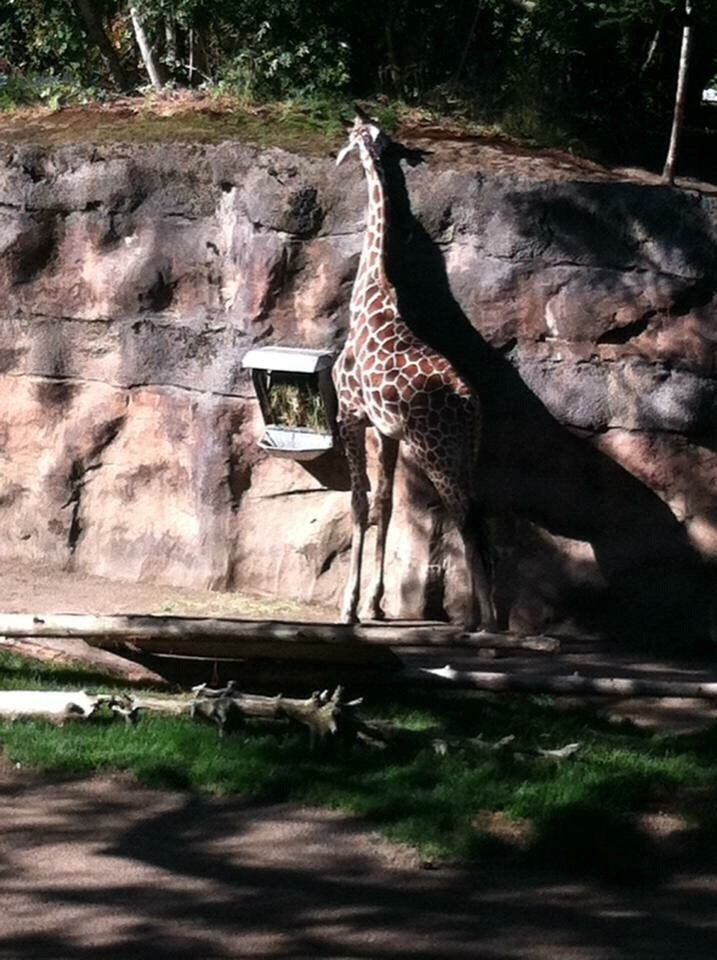 Oregon Zoo: Photos For Oregon Zoo