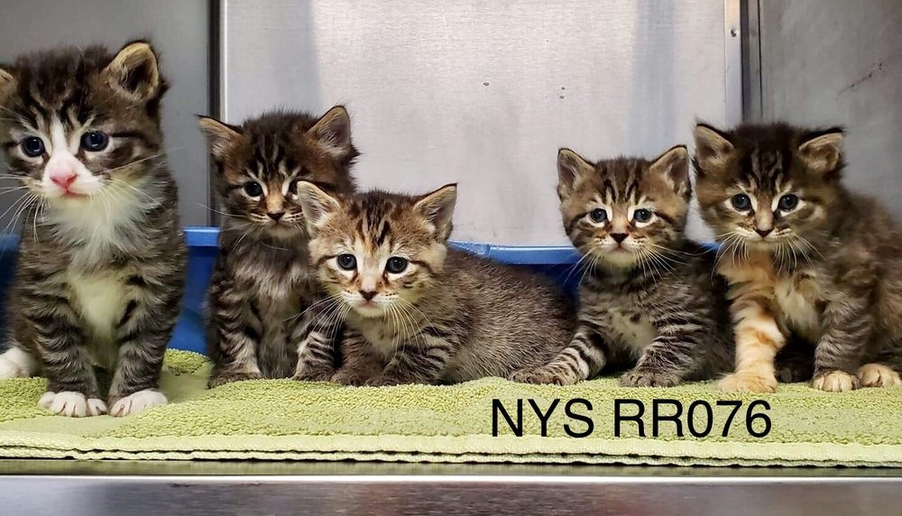 Wyoming County SPCA: 808 Creek Rd, Attica, NY