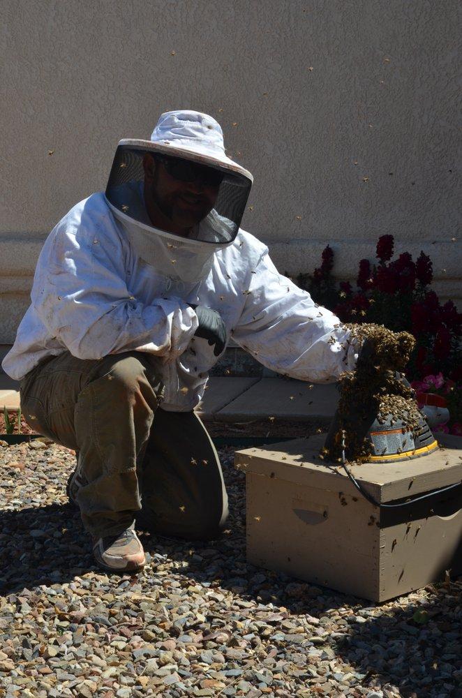 Bee Bustin: 11117 W Old Surrey Pl, Tucson, AZ