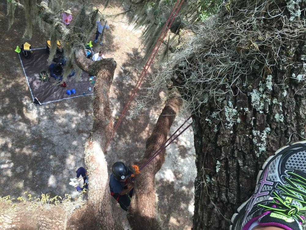 Canopy Climbers: Florida, FL