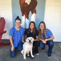 Healdsburg Veterinary Hospital - 30 Photos & 17 Reviews