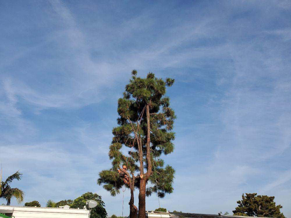 Environmental Green Tree Care