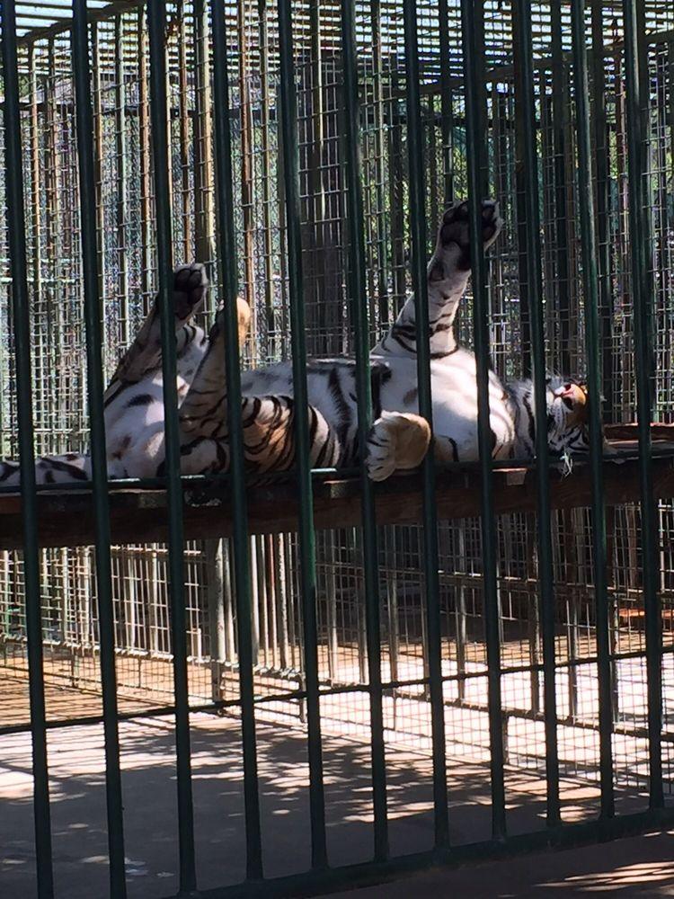 Cedar Cove Feline Conservation - 27 Photos & 20 Reviews