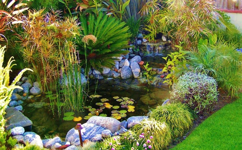 Koi pond water garden paradisse los angeles envirodcape la for Koi pool water gardens cleveleys