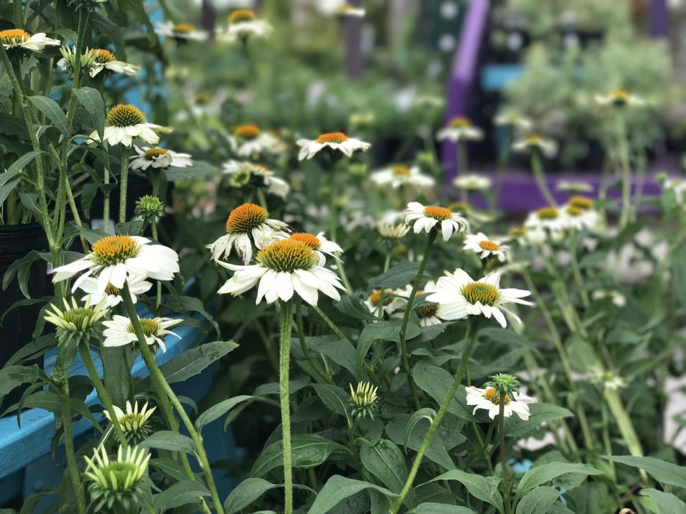 Photo Of Woodleyu0027s Garden Center   Columbia, SC, United States