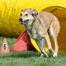 Grace Dog Training Lakewood Co
