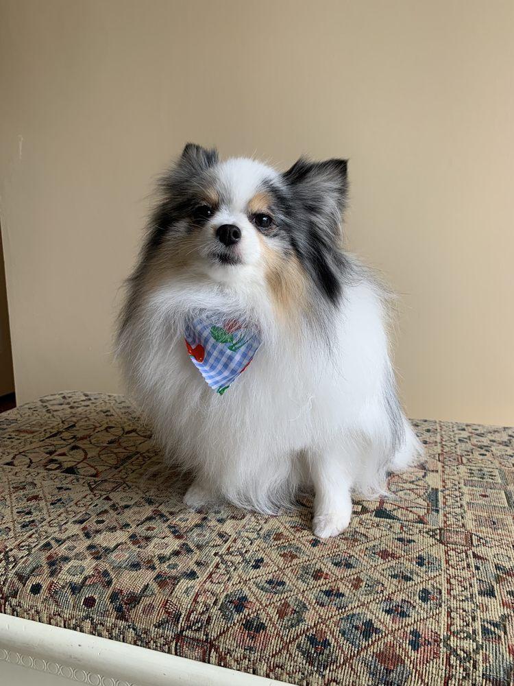 Puppy Bubbles: 2448 76th Ave SE, Mercer Island, WA