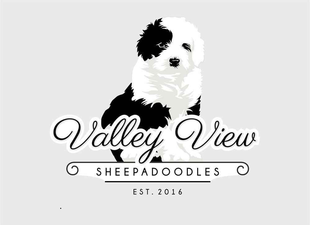 ValleyView Sheepadoodles: 4850 State Hwy Y, Chillicothe, MO
