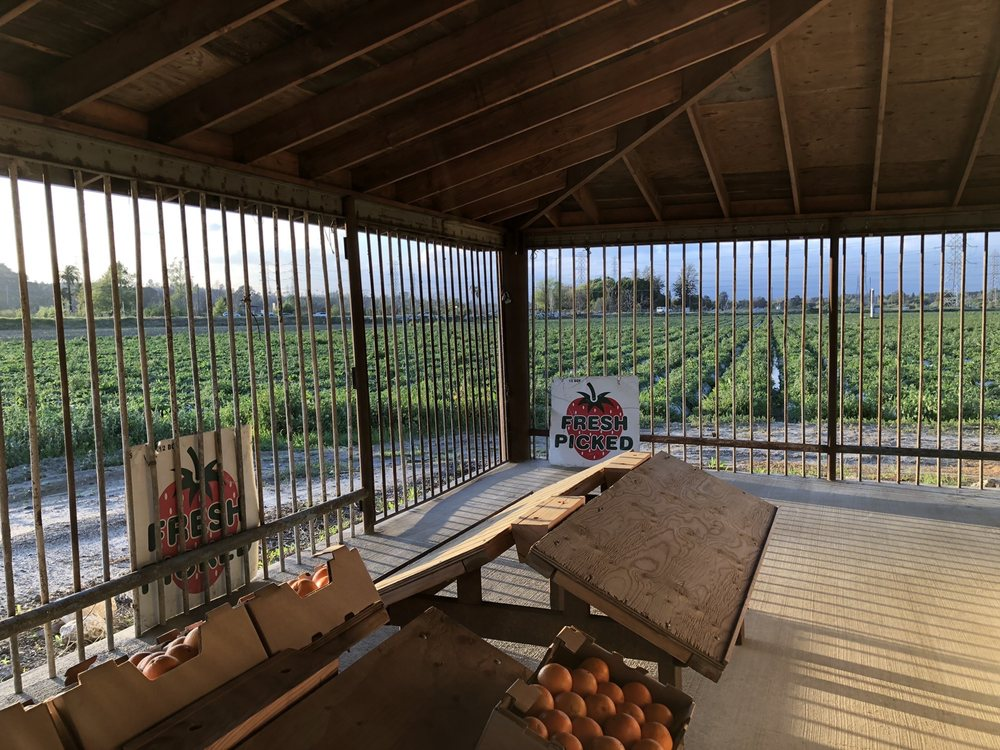 Strawberry Fields Forever: 260 Durfee Ave, South El Monte, CA