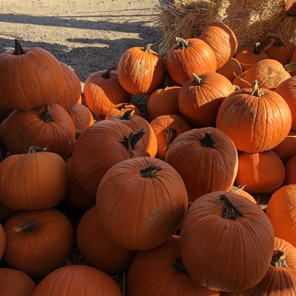 Arizona Pumpkin Patch: 6255 W Bell Rd, Glendale, AZ