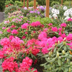 Photo Of Home Grown Gardens Nursery Corvallis Or United States Check Out