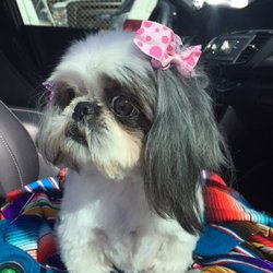 Peggy S Pup N Suds 19 Reviews Pet Groomers 101 W Walnut Ave