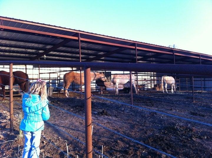 CanyonSide Horse Stalls: 41839 US Hwy 64, Alva, OK