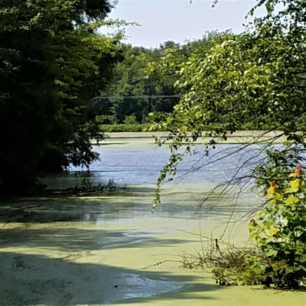 J I Case Wetlands: 6601 E Old Maple Ave, Terre Haute, IN