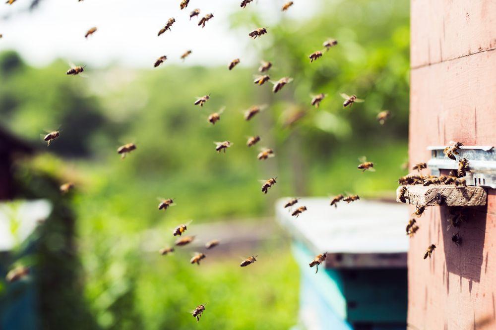 Green Country Pest Control: 1600 E Hwy 6, Alvin, TX