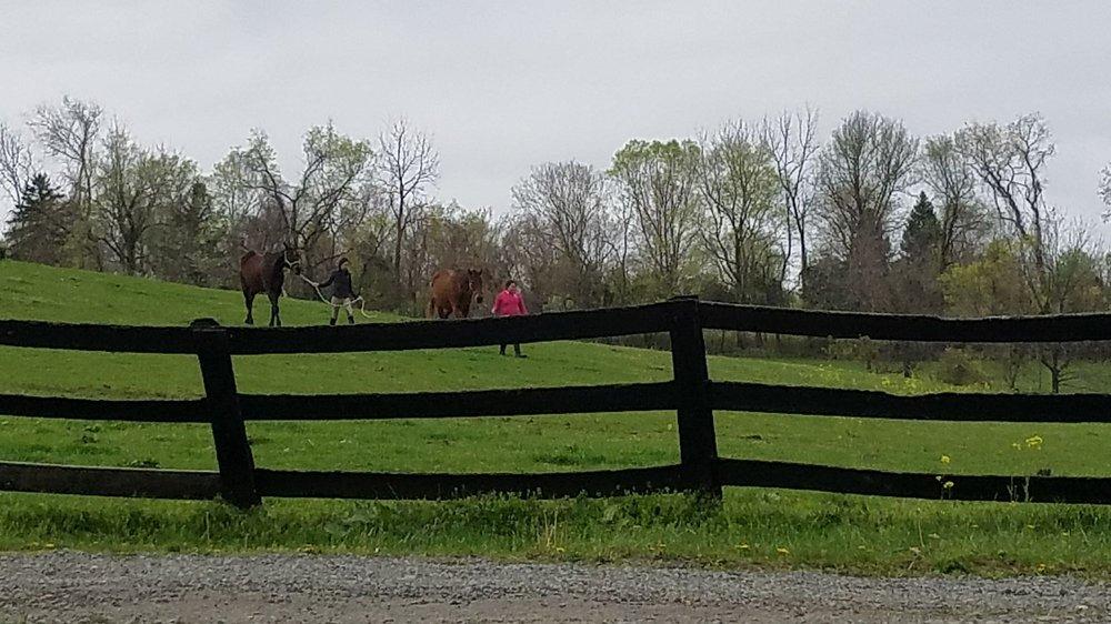 Maintree Farm: 40252 Thomas Mill Rd, Leesburg, VA