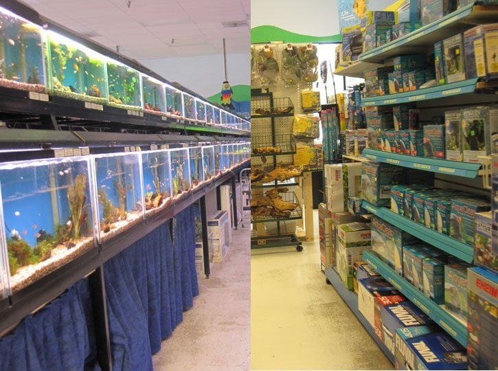 World Of Wet Pets Tropical Fish | 8542 SW Apple Way, Portland, OR, 97225 | +1 (503) 292-7946