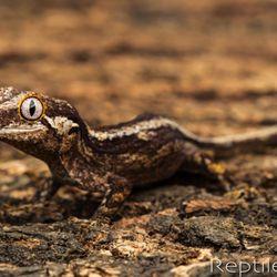 Reptile Factory OC - 153 Photos & 41 Reviews - Reptile Shops