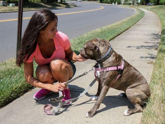 Jersey Shore Pet Care, LLC: 302 River Mist Way, Brielle, NJ