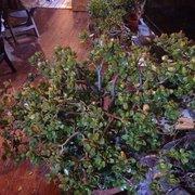 Great ... Photo Of Natty Garden   Brooklyn, NY, United States ...