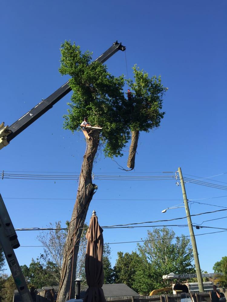 Jesse Scotts Tree Service - 12 Photos - Tree Services ...