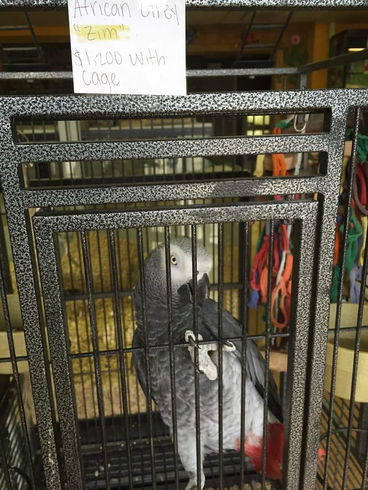 Uptown Pets: 2828 US Highway 431, Boaz, AL