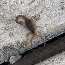 X Out Reviews >> X Out Pest Services 16 Photos 24 Reviews Pest Control 6306