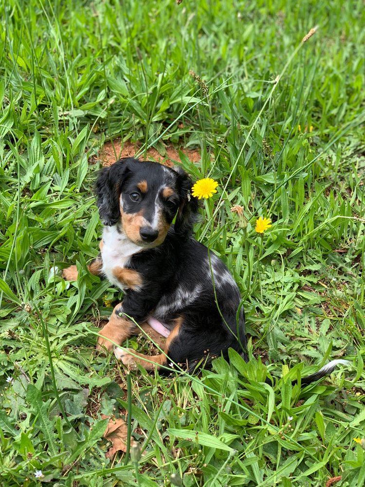 Happy Tails Veterinary Care: 665 Exchange Cir, Bethlehem, GA