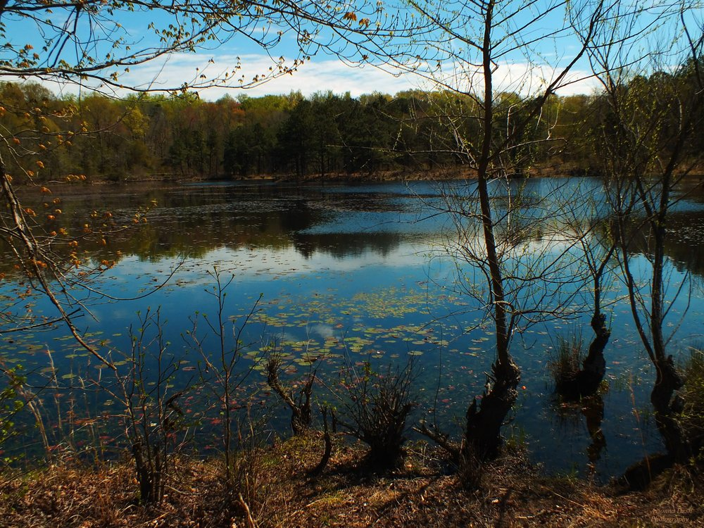 Piney Orchard Nature Preserve: Piney Orchard Pkwy, Odenton, MD