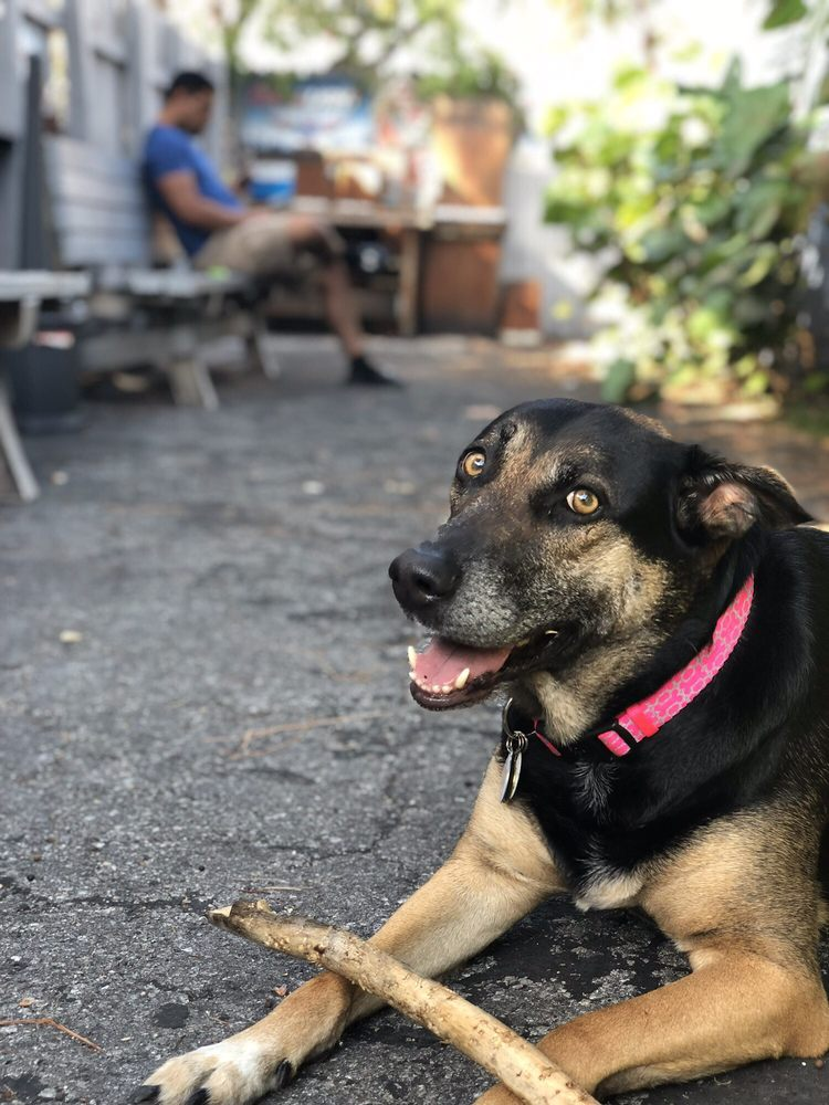 Pawfessional Sitters of Miami