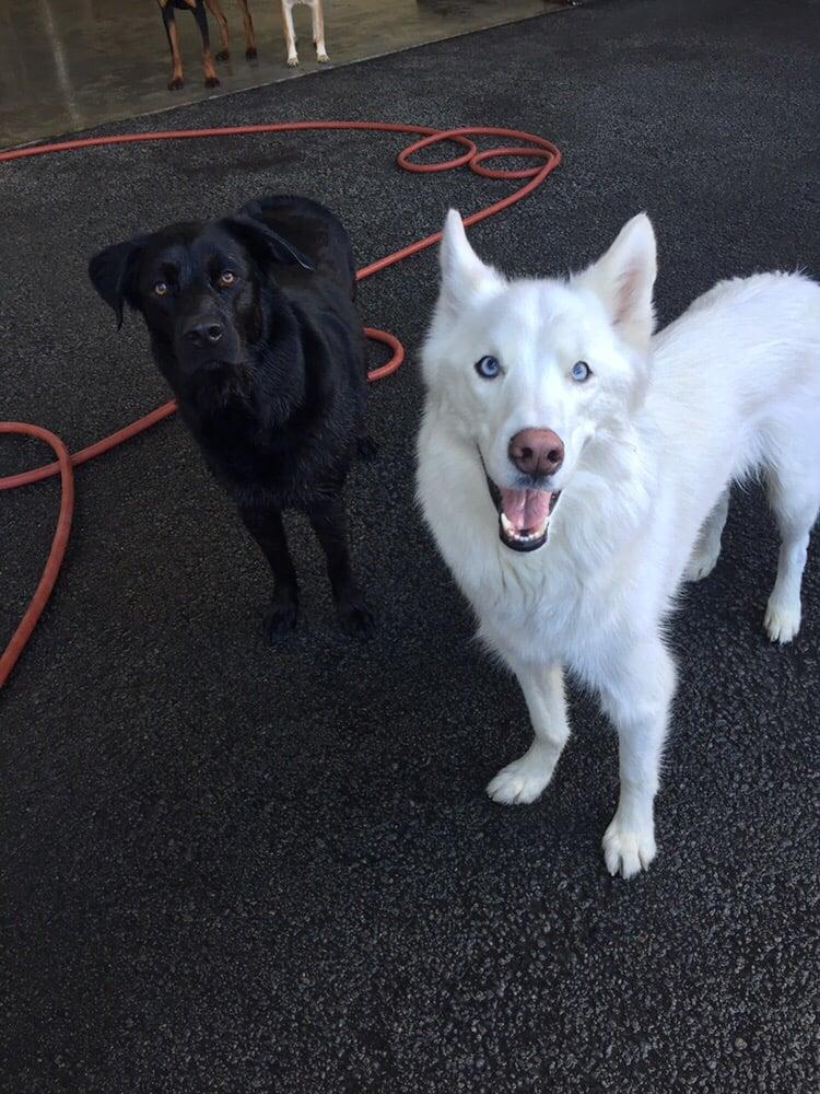 Service Dog Training Reno Nv