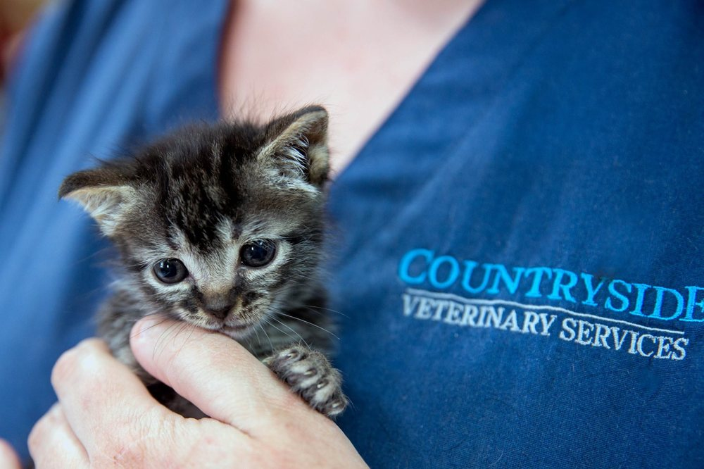 Countryside Veterinary Services: 3435 Maughon Rd, Covington, GA