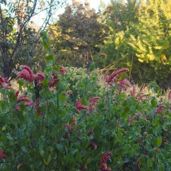Photo Of Los Angeles County Arboretum And Botanic Garden   Arcadia, CA,  United States