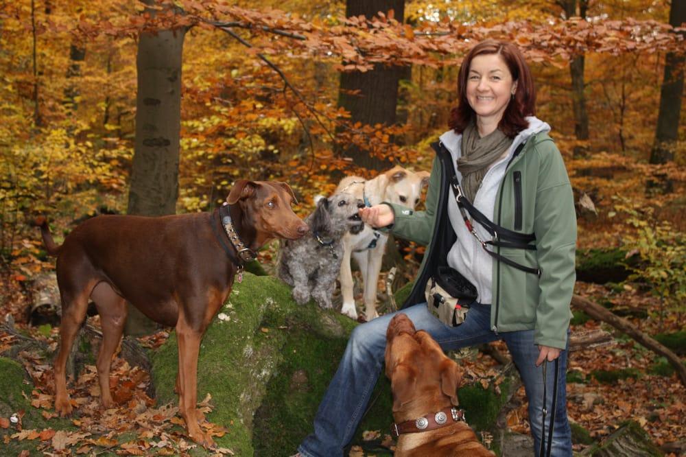 Fotos zu hundherum yelp for Elektriker offenbach