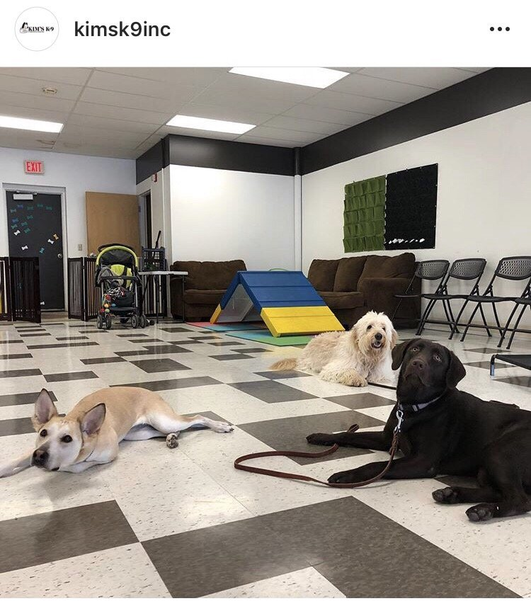 Kim's K-9 Training Center: 3108 Broadmoor Ave SE, Kentwood, MI