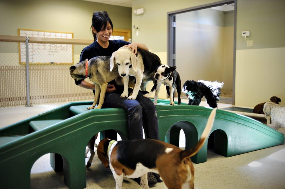 Dog Boarding Memphis Tn