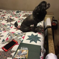 Bubbles & Bows Pet Salon - Pet Sitting - 637 NE Main St