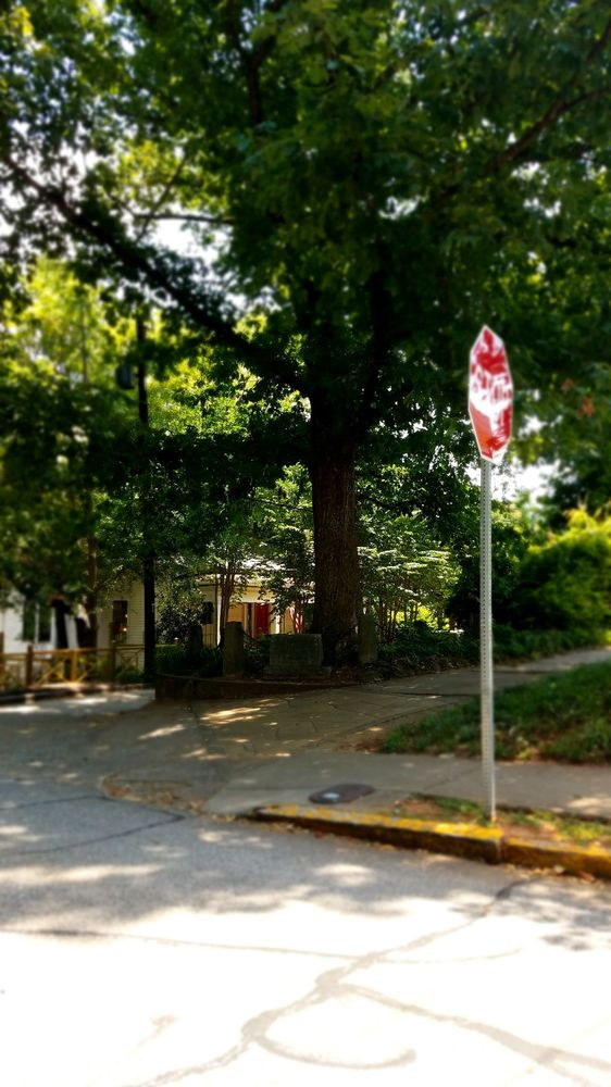 The Tree That Owns Itself: 196 N Milledge Ave, Athens, GA