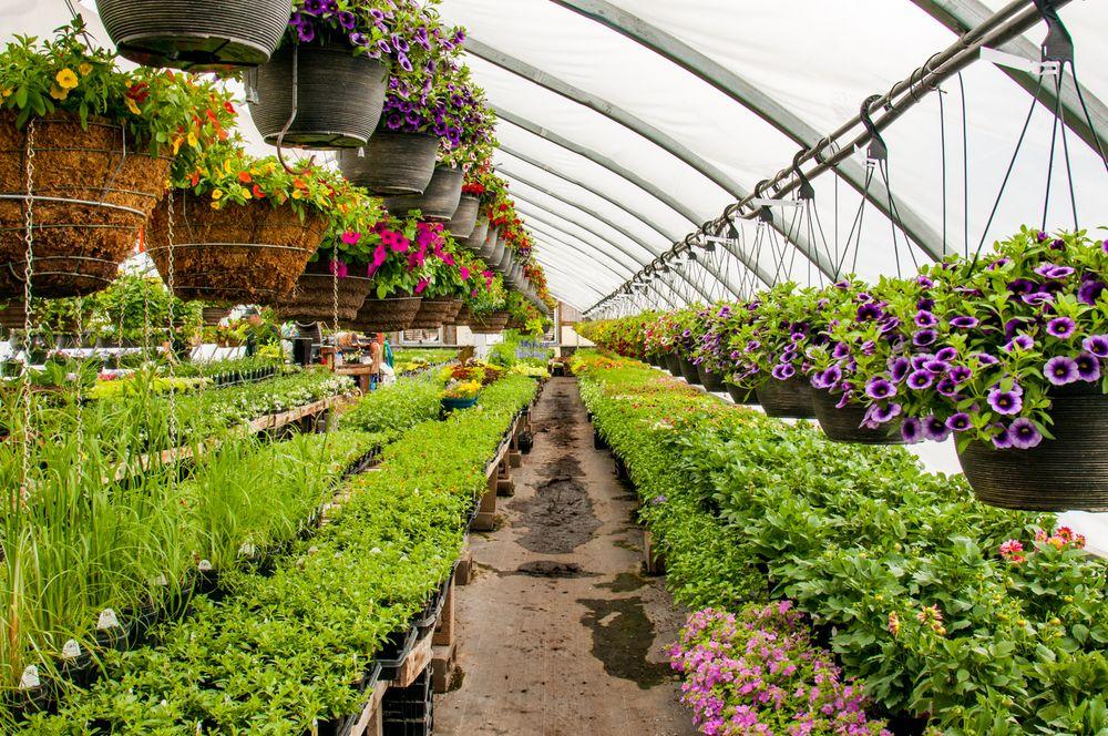 Colonial Nursery Garden Center: 4038 State Highway 27 N, Ladysmith, WI