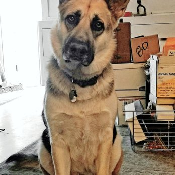 Westside German Shepherd Rescue 191 Photos 292 Reviews Animal