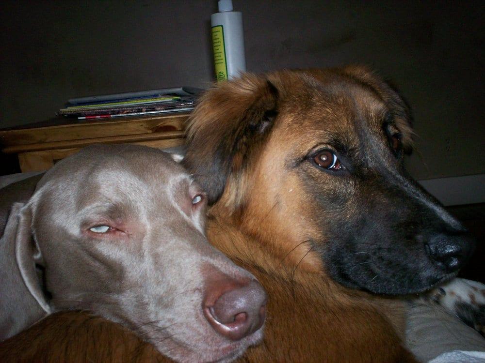 Dirty Feet Pet Care: Covington, KY