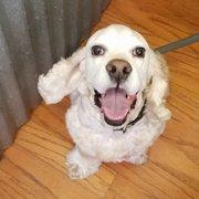 Blissful bark dog wash 18 photos 22 reviews pet groomers my photo of blissful bark dog wash flower mound tx united states cody solutioingenieria Choice Image