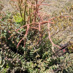 Photo Of A R Nursery Rosemead Ca United States D Succulents