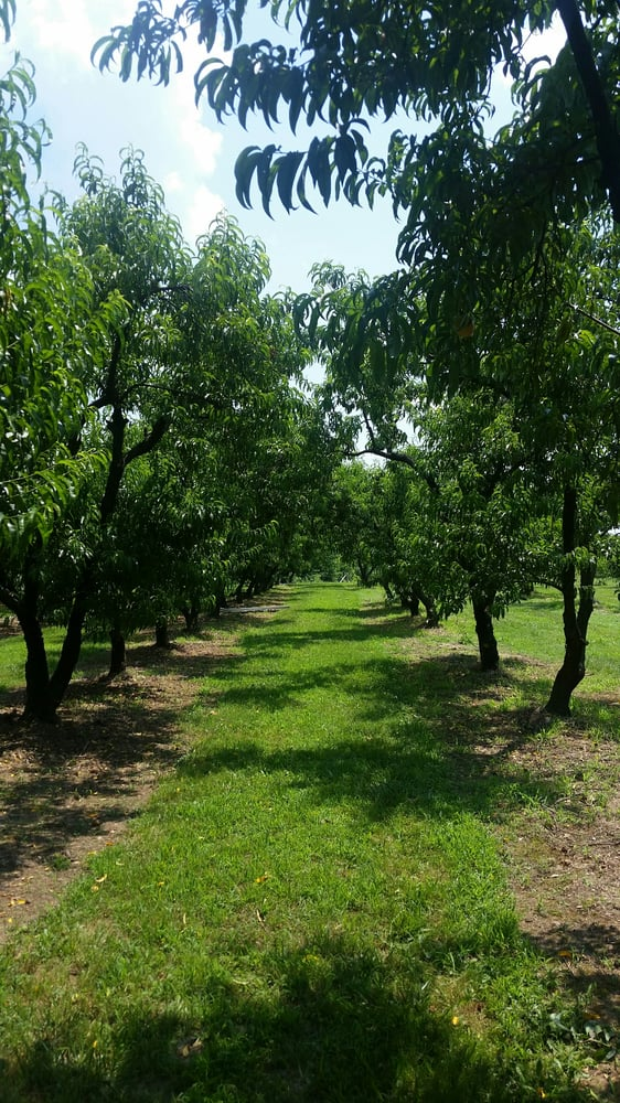 Taylor's Orchard: 12801 Taylor Orchard Rd, Gentry, AR