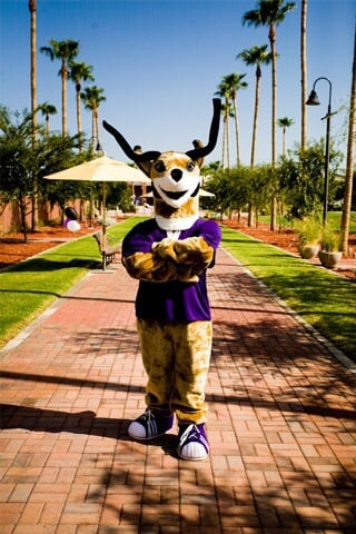Thunder The Gcu Mascot Yelp