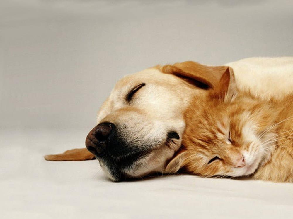 Animal Lover Pet Sitting: 458 Pension Rd, Monroe Township, NJ