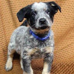 Rocky Mountain Puppy Rescue 36 Photos 32 Reviews Animal
