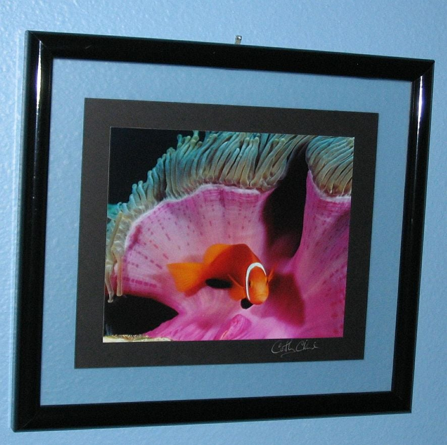 Matting and framing of signed underwater photography done at ...