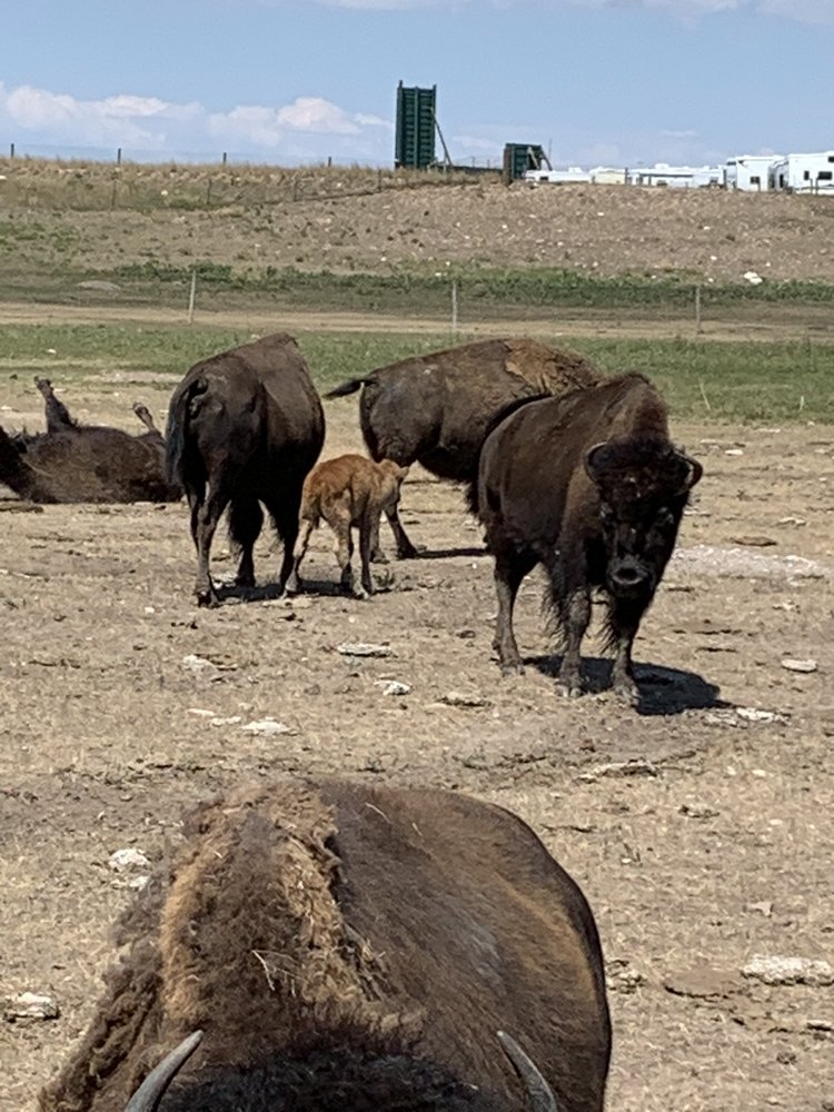 Terry Bison Ranch: 51 I-25 Frontage Rd, Cheyenne, WY