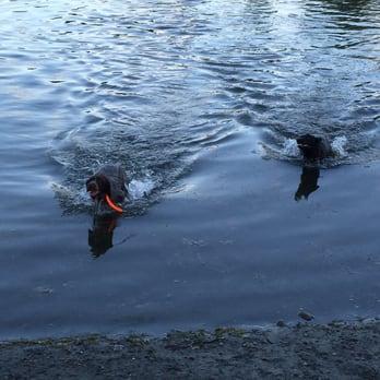 Anchorage Park Dog Training